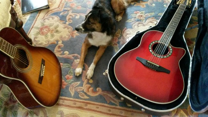 dog guitars