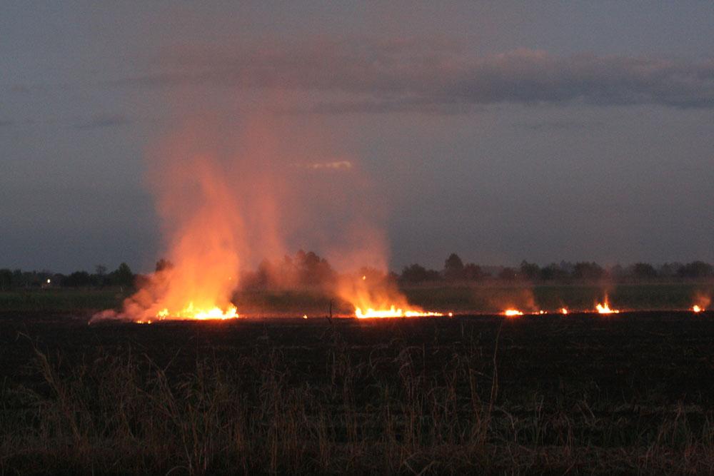 c-burning-cane
