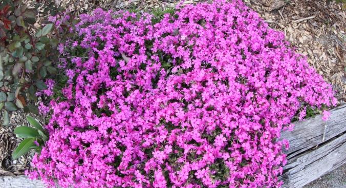 a_flowers-sewanee